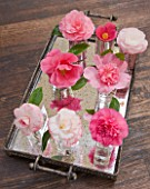 CAMELLIAS IN A MIRRORED TRAY  - STYLING BY JACKY HOBBS - CAMELLIA WATERLILY  DESIRE  ST EWE  BALLET QUEEN  DONATION  DEBBIE  MARGARET DAVIS  TAMMIA