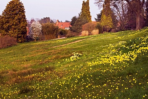 RHS_GARDEN__WISLEY__SURREY__THE_ALPINE_MEADOW_WITH_DAFFODILS_AND_NARCISSUS_BULBOCODIUM_WITH_HOUSE_BE