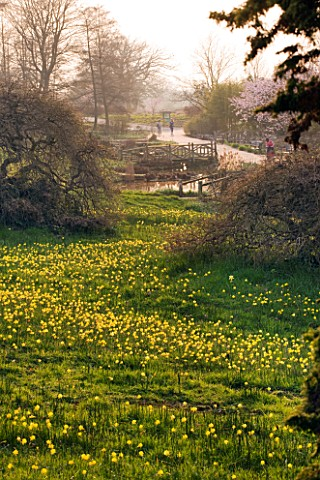 RHS_GARDEN__WISLEY__SURREY__THE_ALPINE_MEADOW_WITH_NARCISSUS_BULBOCODIUM
