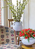 DESIGNER: KALLY ELLIS  LONDON: GLAZED EARTHENWARE POTS HOLD SPIRAEA BRANCHES AND ALADDIN TULIPS