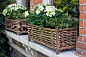 DESIGNER: KALLY ELLIS  LONDON: RUSTIC WOVEN WINDOWBOXES CONTAINING WHITE HYDRANGEAS AND JASMIN IN BUD