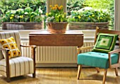 DESIGNER: KALLY ELLIS  LONDON: LIVING ROOM - ARMCHAIRS WITH DISPLAY OF SPRING FLOWERS AND RUSTIC WINDOWBOXES BEHIND