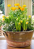 DESIGNER: KALLY ELLIS  LONDON: GLAZED POT HOLDS YELLOW AND WHITE SPRING DISPLAY OF JASMINE  TETE A TETE DAFFODILS AND RANUNCULUS