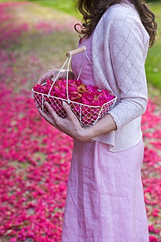 TREGOTHNAN__CORNWALL_GIRL_WITH_TRUG_FILLED_WITH_FLOWERS_OF_RHODODENDRON_RUSSELLIANUM