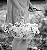 TREGOTHNAN  CORNWALL: BLACK AND WHITE IMAGE OF GIRL HOLDING WHITE BASKET FILLED WITH BLOSSOM OF PRUNUS KANZAN