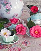 TREGOTHNAN  CORNWALL: CAMELLIAS IN VINTAGE TEA CUPS - STYLING BY JACKY HOBBS - CAMELLIA TRICOLOR  LAURA BOSCAWEN  AKASHIGATA  MERCURY