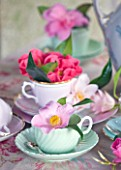 TREGOTHNAN  CORNWALL: CAMELLIAS IN VINTAGE TEA CUPS - STYLING BY JACKY HOBBS - CAMELLIA J C WILLIAMS IN GREEN TEACUP