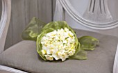 NARCISSUS CHEERFULNESS ON GREY CHAIR WRAPPED IN GREEN RIBBON - STYLING BY JACKY HOBBS