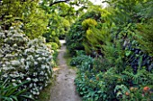 GARDEN OF PAOLO PEJRONE  ITALY: PATH THROUGH GARDEN WITH CHOISYA TERNATA AZTEC PEARL AND FERNS