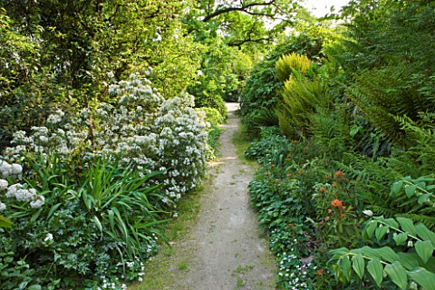 GARDEN_OF_PAOLO_PEJRONE__ITALY_PATH_THROUGH_GARDEN_WITH_CHOISYA_TERNATA_AZTEC_PEARL_AND_FERNS