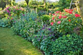 ANDRE EVE ROSE NURSERY  FRANCE: BORDER OF AQUILEGIAS AND ROSES BESIDE GRASS PATH. ON RIGHT IS ROSE - ROSA JOSEPHS COAT