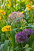 ANDRE EVE GARDEN  FRANCE - IRIS ROY DAVIDSON AND ALLIUM CHRISTOPHII