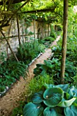 ANDRE EVE GARDEN  FRANCE - HOSTA ABIQUA DRINKING GOURD BENEATH A PERGOLA WITH PATH