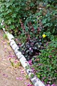 ANDRE EVE GARDEN  FRANCE - HEUCHERAS AND GERANIUMS BESIDE PATH EDGED WITH SILVER BIRCH LOGS