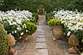 DESIGNER MICHEL SEMINI  PROVENCE  FRANCE: MAS THEO - THE SWIMMING POOL GARDEN WITH PATH THROUGH GRAVEL AND TERRACOTTA CONTAINERS PLANTED WITH WHITE ROSES TO COURTYARD BEYOND