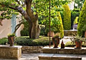 DESIGNER MICHEL SEMINI  PROVENCE  FRANCE: MAS THEO - TREE WITH LOW STONE WALL IN COURTYARD - TERRACOTTA CONTAINERS AND FOUNTAIN IN THE BACKGROUND