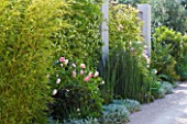 DESIGNER DOMINIQUE LAFOURCADE  PROVENCE  FRANCE: PIERRE DE RONSARD ROSES AND BAMBOOS ALONG THE DRIVEWAY WITH CONCRETE PILLARS AND TRACHELOSPERMUM JASMINOIDES
