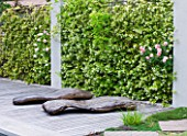 DESIGNER DOMINIQUE LAFOURCADE  PROVENCE  FRANCE: PIERRE DE RONSARD ROSES BESIDE DECKING WITH CONCRETE PILLARS  TRACHELOSPERMUM JASMINOIDES AND WOOD CHAISE-LONGUES BY MARC NUCERA