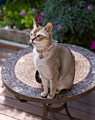 KARLA NEWELL GARDEN  BRIGHTON: SMALL TOWN GARDEN - MIXIE THE ABYSSINIAN CAT