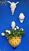 KARLA NEWELL GARDEN  BRIGHTON: SMALL TOWN GARDEN - BLUE WALL WITH ANIMAL SKULLS AND CERAMIC PLANTER