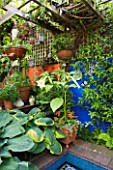 KARLA NEWELL GARDEN  BRIGHTON: SMALL TOWN GARDEN - BLUE AND ORANGE RENDERED WALLS   WOODEN PERGOLA AND HOSTAS ABOVE MOSAIC POOL