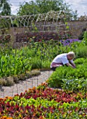 WHATLEY MANOR  WILTSHIRE: CHEF PICKING VEGETABLES IN THE KITCHEN GARDEN