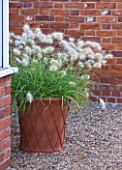 ULTING WICK  ESSEX - THE GREENHOUSE WITH TERRACOTA CONTAINER PLANTED WITH PENNISETUMS
