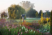 WATERPERRY GARDENS  OXFORDSHIRE: THE TRIAL BEDS AT DAWN WITH PENSTEMONS  VERBENA BONARIENSIS AND YELLOW VERBASCUMS