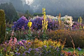 WATERPERRY GARDENS  OXFORDSHIRE: THE TRIAL BEDS AT DAWN WITH YELLOW VERBASCUMS AND ASTERS