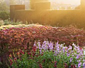 WATERPERRY GARDENS  OXFORDSHIRE: THE TRIAL BEDS AT DAWN WITH PENSTEMONS AND SEDUMS