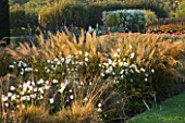 WATERPERRY GARDENS  OXFORDSHIRE: TRIAL BEDS AT DAWN WITH ANEMONE X HYBRIDA ANDREA ATKINSON AND CALAMAGROSTIS BRACHYTRICHA