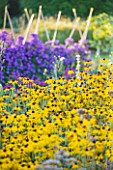 WATERPERRY GARDENS  OXFORDSHIRE: RUDBECKIAS AND ASTERS IN THE TRIAL BEDS