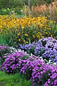 WATERPERRY GARDENS  OXFORDSHIRE: ASTERS AND RUDBECKIAS IN THE TRIAL BEDS - EVENING LIGHT