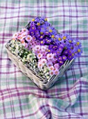 WATERPERRY GARDENS  OXFORDSHIRE: BASKET ON BLANKET: ASTER VIOLET QUEEN  ASTER SCHONE VON DIETLIKON  ASTER HARRINGTONS PINK AND ASTER  SULPHUREA. STYLING BY JACKY HOBBS