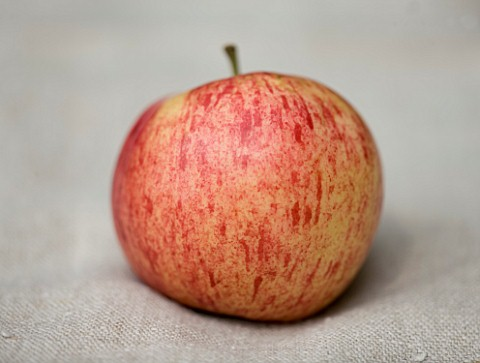 APPLE__MALUS_LAXTONS_FORTUNE__RHS_LONDON_AUTUMN_HARVEST_SHOW_2011_STYLING_BY_JACKY_HOBBS
