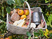 LUNCH HAMPER WITH APPLES  BREAD AND CHEESE IN THE ORCHARD - WATERPERRY APPLE DAY EVENT  WATERPERRY GARDENS  OXFORDSHIRE