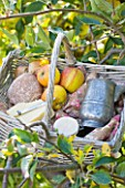 LUNCH HAMPER WITH CHEESE  APPLES AND BREAD IN THE ORCHARD - WATERPERRY APPLE DAY EVENT  WATERPERRY GARDENS  OXFORDSHIRE