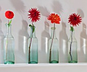 JACKY HOBBS HOUSE  LONDON: DISPLAY OF FIERY RED DAHLIAS IN ROW OF VINTAGE GLASS BOTTLES ON MANTELPIECE ABOVE FIRE