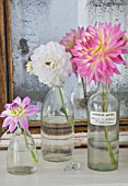 JACKY HOBBS HOUSE  LONDON: DAHLIAS TWILIGHT TIME  DAHLIA FLANIGAN WHITE AND DAHLIA GAY PRINCESS IN GLASS BOTTLES ON DRESSING TABLE BY MIRROR