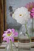 JACKY HOBBS HOUSE  LONDON: DAHLIAS TWILIGHT TIME AND DAHLIA FLANIGAN WHITE IN GLASS BOTTLES ON DRESSING TABLE BY MIRROR