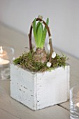 WHITE HOUSE: BREAKFAST ROOM: WHITE SQUARE WOODEN PLANTER WITH HYACINTH BULB AND PUSSY WILLOW