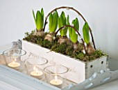 WHITE HOUSE: BREAKFAST ROOM - WHITE WOODEN PLANTER OF WHITE HYACINTHS AND PUSSY WILLOW ON TRAY WITH GLASS TEA LIGHTS.