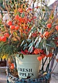 THE MANOR HOUSE  STEVINGTON  BEDFORDSHIRE. DESIGNER: KATHY BROWN: WINTER CONTAINER DISPLAY WITH CHINESE LANTERNS AND EUCALYPTUS IN METAL CONTAINER