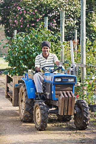 TREHANE_NURSERY__DORSET_DHANI_DRIVING_A_TRACTOR_LOADED_UP_WITH_CAMELLIAS_AT_THE_NURSERY