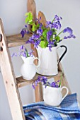 FISHING COTTAGE  KNEBWORTH PARK: STYLING BY JACKY HOBBS: BLUEBELLS IN WHITE JUGS AND CONTAINERS ON WOODEN LADDER - SPRING