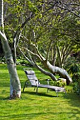 HERM ISLAND  CHANNEL ISLANDS - SUN LOUNGER BESIDE EUCALYPTUS TREES ON THE LAWN OF THE WHITE HOUSE HOTEL
