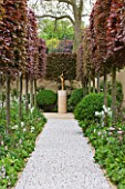 CHELSEA 2012 - LAURENT PERRIER GARDEN BY ARNE MAYNARD - PEBBLE PATH WITH PLEACHED COPPER BEECH