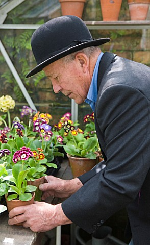 W__S_LOCKYER_AURICULA_NURSERY___AURICULA_EXPERT_AND_GROWER_WILLIAM_LOCKYER_PREPARES_FOR_THE_CHELSEA_