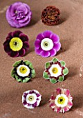 W & S LOCKYER AURICULA NURSERY -  AURICULAS ON A TERRACOTTA TILE - LEFT TO RIGHT TOP TO BOTTOM -