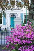 GRANGE COURT  GUERNSEY: PINK AZALEA WITH VIEW PAST FRONT GATES TO HOUSE OPPOSITE
